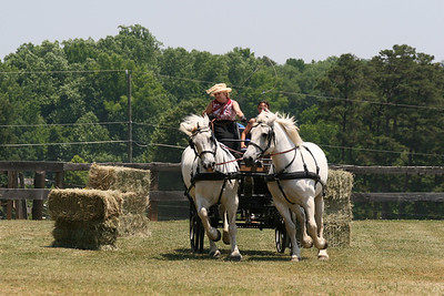 The North Carolina Percheron Horse Association Annual Field Day 2008