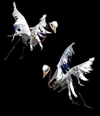 bird composit1