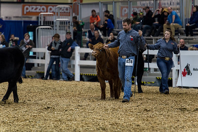 Royal Agricultural Winter Fair 2016