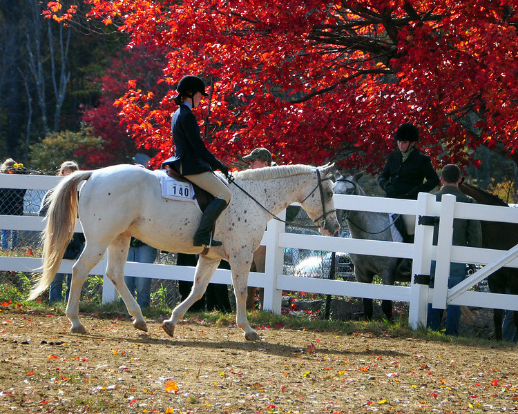 It was a colorful day at the equestrian events at the 99th Sandwich Fair, in Sandwich New Hampshire, on October 10th, 2009. The fair concluded on October 12th.