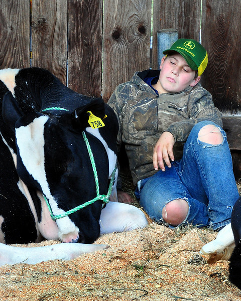 This young man takes a break from his busy duties at the Sandwich Fair, with one of the cows he's been tending to. The Fair ran from October 10th thru 12th, 2009, in Sandwich, New Hampshire.
