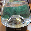 No, this is not a trendy goldfish bowl - clear brewing water magnifying a ball of yarn in the background.