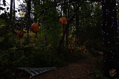 2020-Pumpkin Show 2020-8