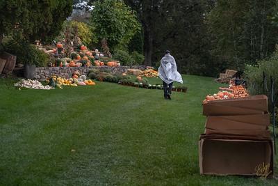 2019-Pumpkin Show-8