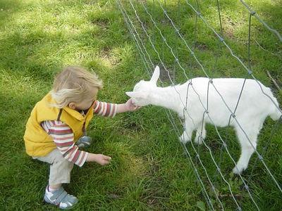 at the Kemphaan, a 'city-farm'. Elise feeding the goat.