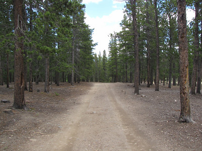 beautiful dirt road by the Boy Scout Camp