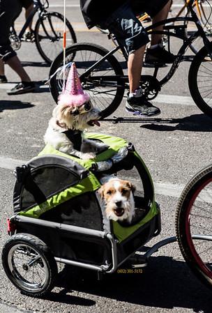 Dogs_tour de fat 0374blur