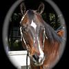 Kathy Goddard's Horse