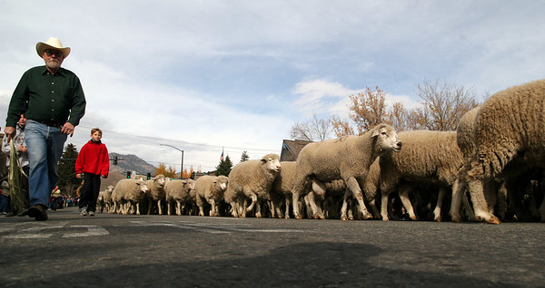 Trailing of the Sheep - Ketchum, Idaho