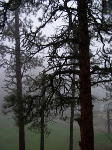 Misty view through the pines above the ballfield