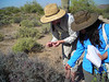 2009 SOS Training: Seed collection at Tonto National Forest (April 2009). Photo by Mary Byrne