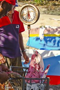 Weighing Yellow Fin Tuna