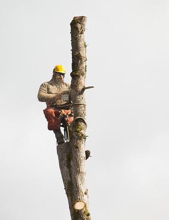TREE8509-48