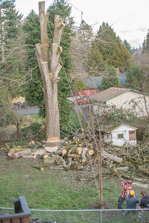 TREE8564-64