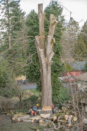 TREE8560-63