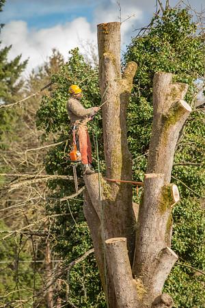TREE8549-58