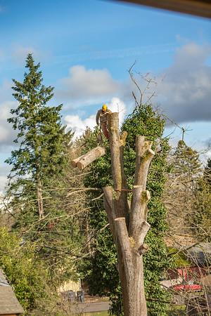 TREE8546-57