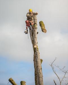 TREE8511-49