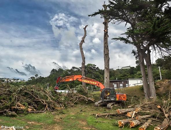 Tree felling in Awa Road, Worser Bay, 14 February 2018