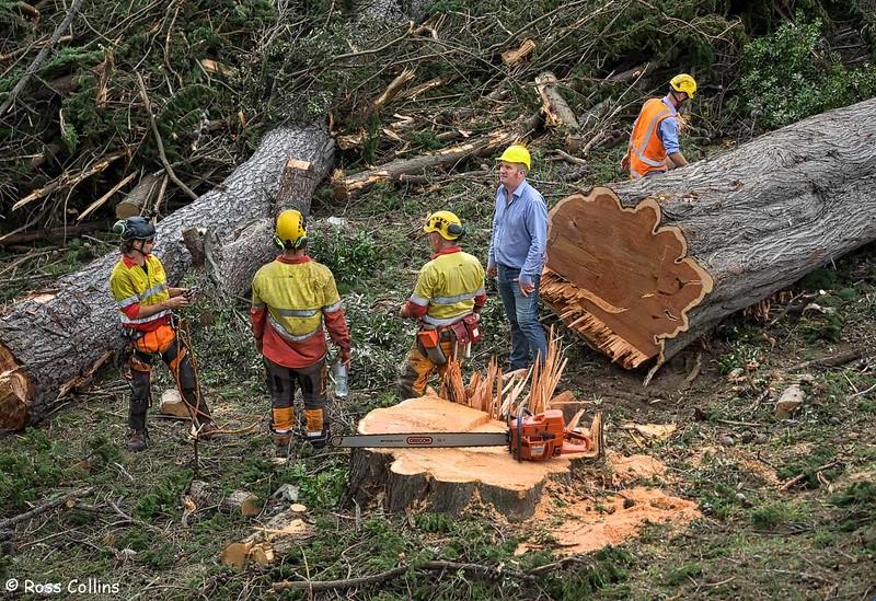 Tree felling in Awa Road, Worser Bay, 16 February 2018