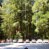 Tall panorama of Evan at Big Basin.  (Warning: Big original file size of 3203 x 5700 pixels)