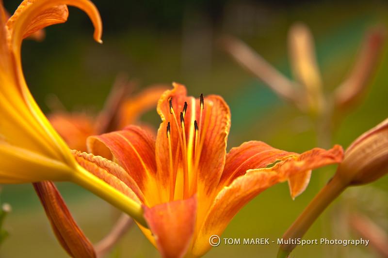 OrangeFlower_HDR2