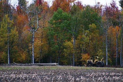 A logging operation at the back of the field.