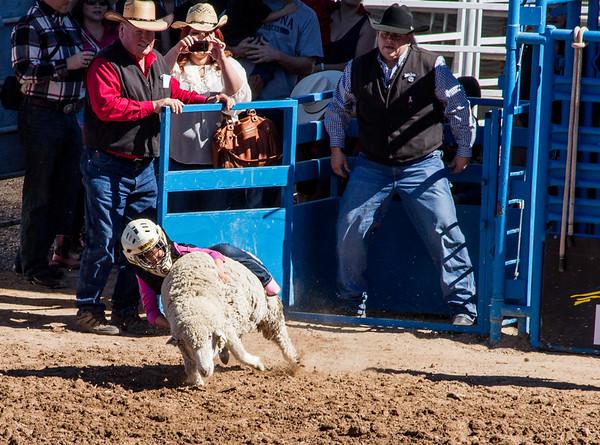Tucson Rodeo 2014