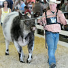 Don Knight | The Herald Bulletin<br /> Miller Smith competes in senior showmanship during the beef show at the 4-H Fair on Tuesday in Alexandria. Smith was named the champion in senior showmanship.