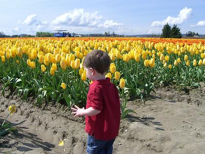 Tulips 2007