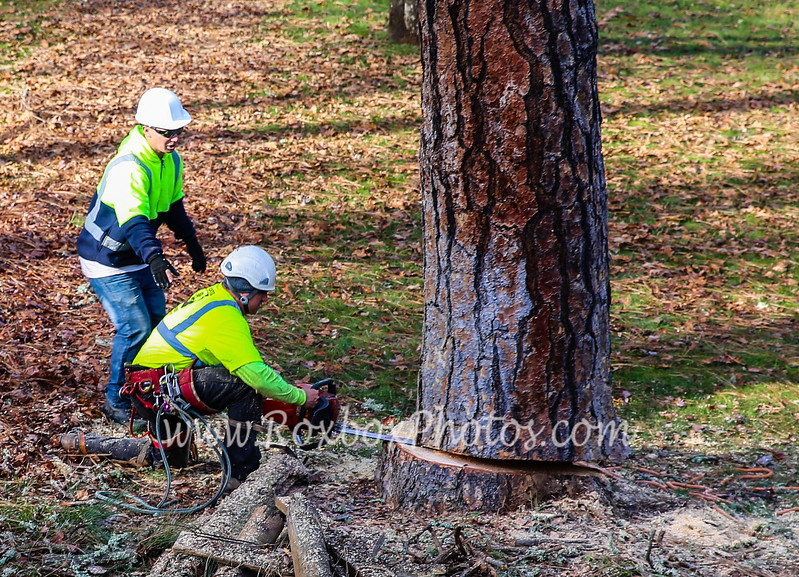 Twin Cities Tree Service-41