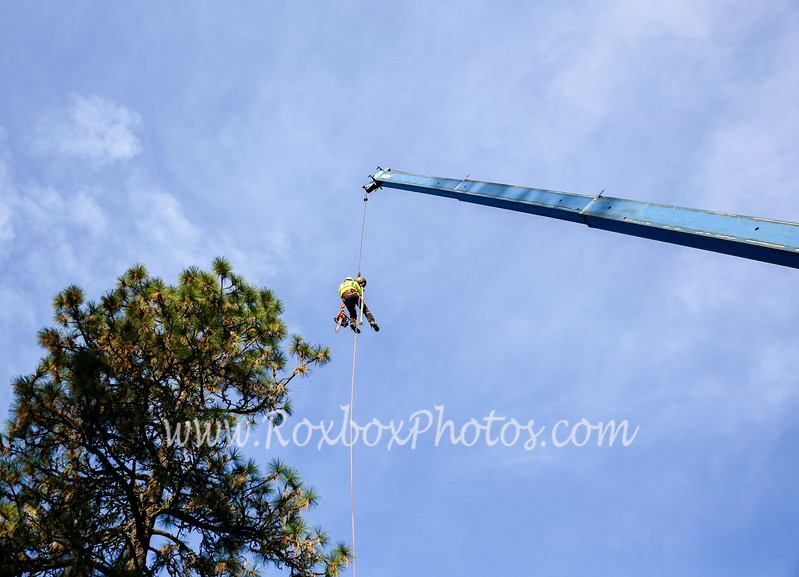 Twin Cities Tree Service-2