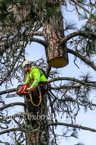 Twin Cities Tree Service-26