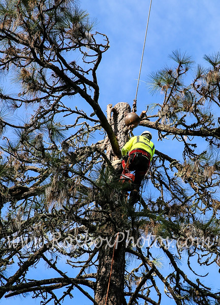Twin Cities Tree Service-12