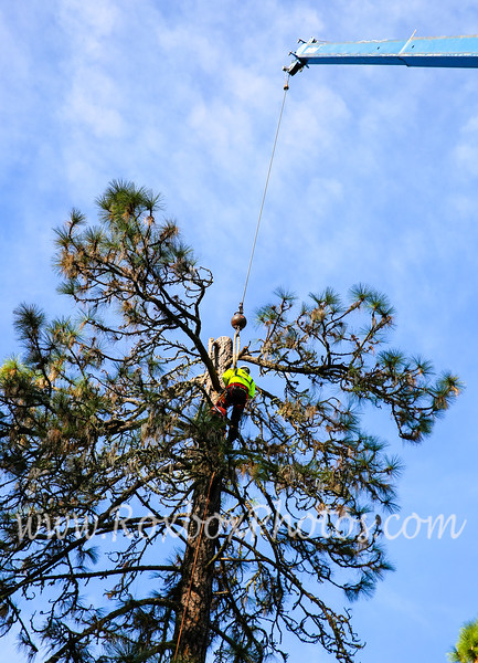 Twin Cities Tree Service-11