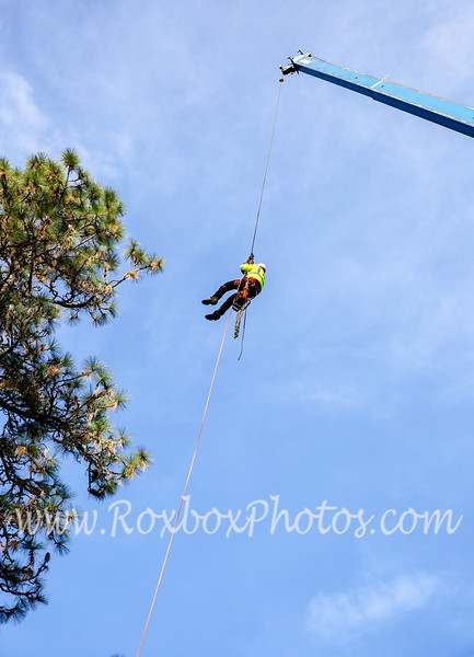 Twin Cities Tree Service-1