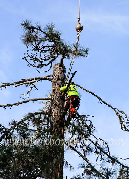 Twin Cities Tree Service-21
