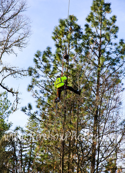 Twin Cities Tree Service-45