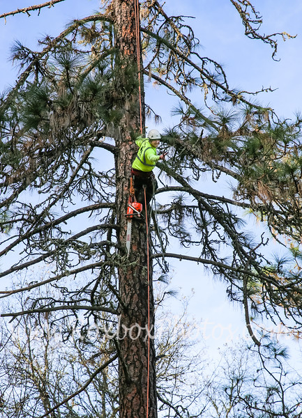 Twin Cities Tree Service-23