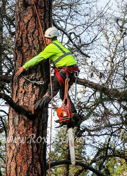 Twin Cities Tree Service-30