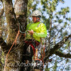 Twin Cities Tree Service-57