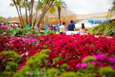 2017 Epcot® International Flower & Garden Festival