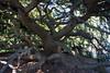 Tyler Arboretum1425