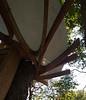 Tyler Arboretum1464