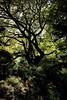 Tyler Arboretum1472