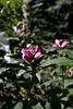 Tyler Arboretum1458