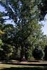 Tyler Arboretum1488