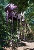 Tyler Arboretum1497