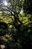 Tyler Arboretum1473