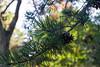 Tyler Arboretum1503